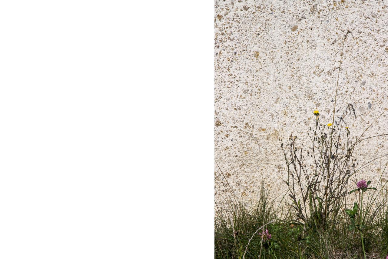 014 Aussen_Wand_Ost_mit_Blumen_ohne_Layer_300dpi